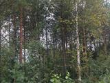 Земельный участок 6 соток (СНТ, ДНП)