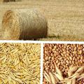 Требуется. Сено, овёс, ячмень, пшеница, комбикорм